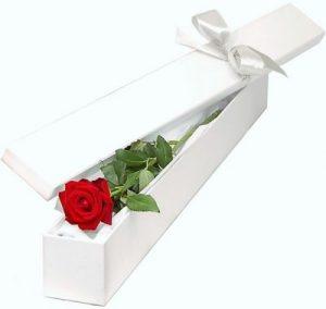 Single Red Rose in White Box
