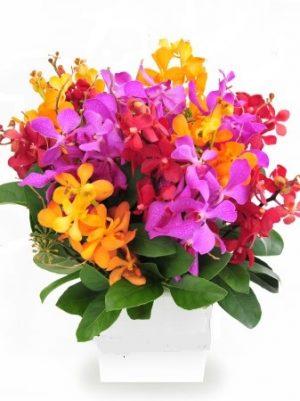 Send Exotic Orchid flower box online Melbourne