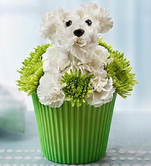Birthday Floral Pet Melbourne