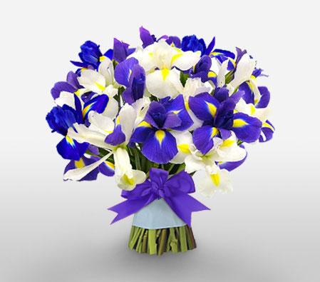 Iris Bouquet for Birthday Melbourne