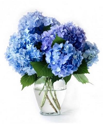 Order Hydrangeas Flowers for Libra Zodiac Delivery Melbourne