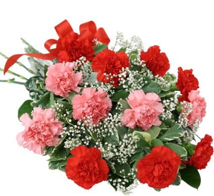 Order Carnation For Sagittarius zodiac Delivery Melbourne