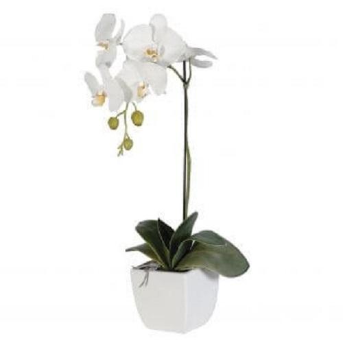Order Symbolized Sympathy Orchid Plant Delivery Melbourne