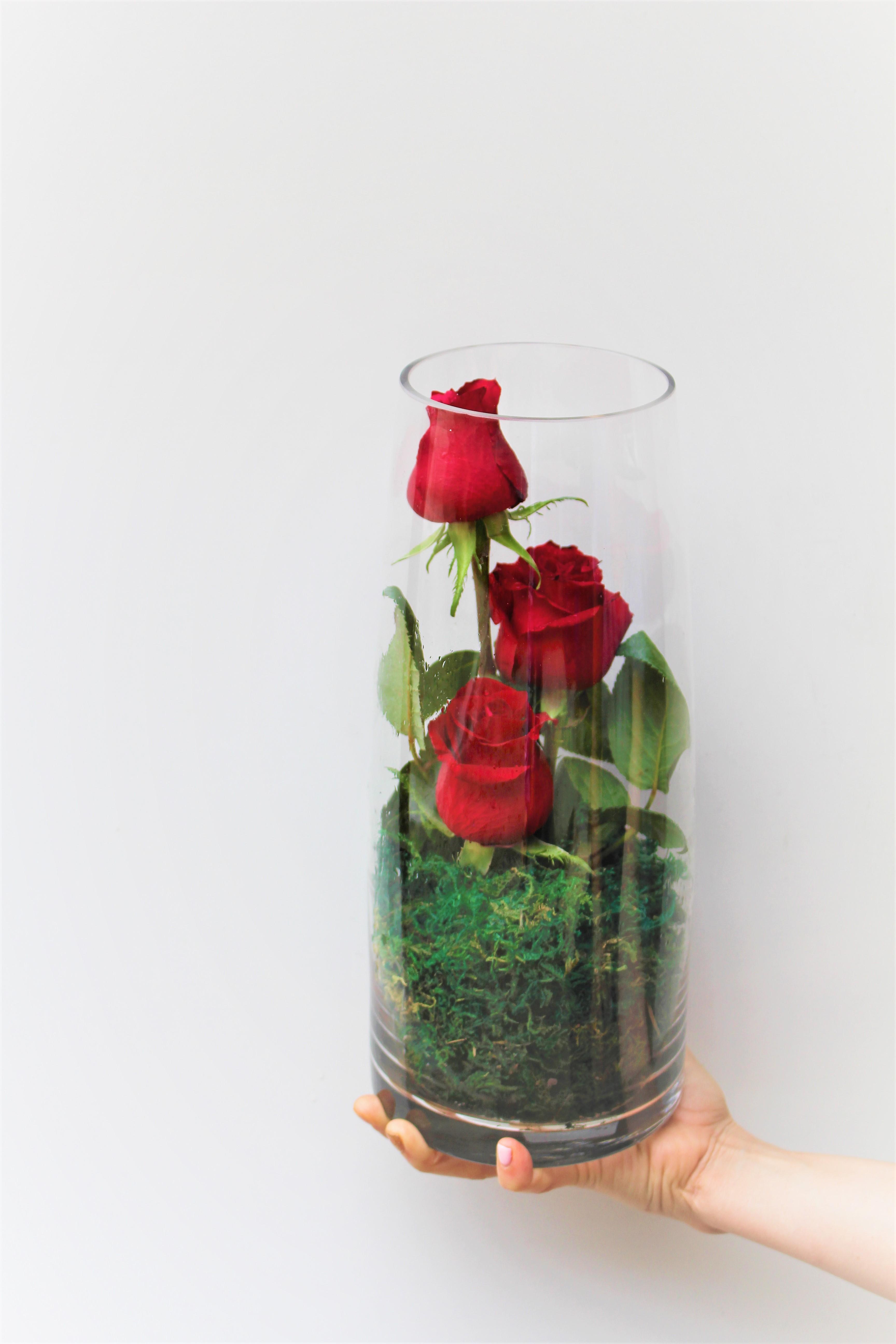 Enchanting Roses