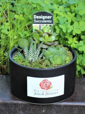 Gorgeous Succulent Plant
