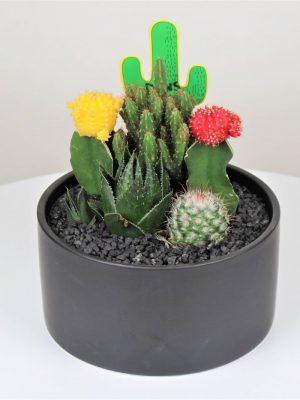 Cactus Large Black Bowl