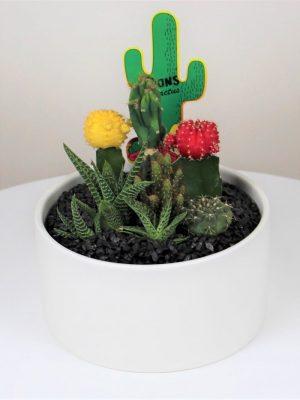 Large Cactus White Bowl