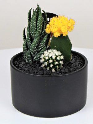 Small Cactus Black Bowl