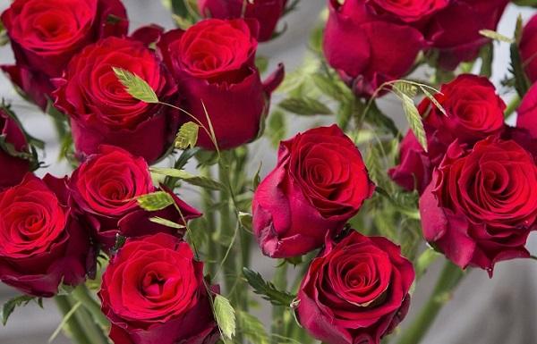 Order Rhodos Red Roses Delivery Melbourne