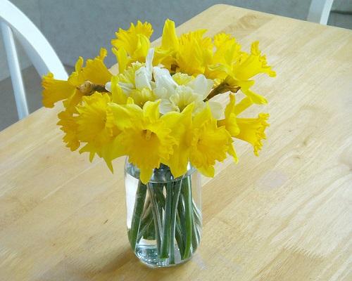 Daffodils Flowers Online
