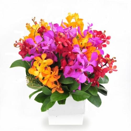 Order Orchid Box Arrangement Melbourne