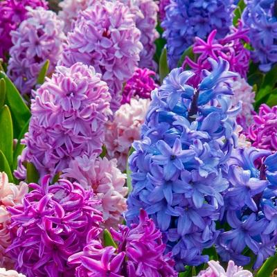 Order Flowers Online in Pune