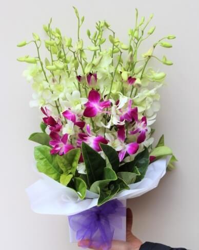 Order Online Orchid Melbourne