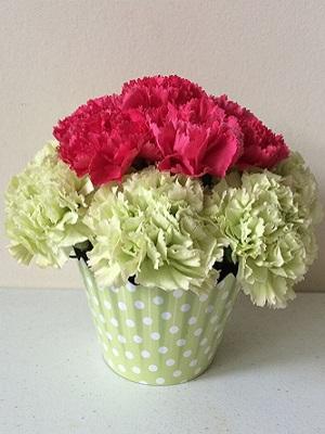 Carnation Flower Delivery in Melbourne
