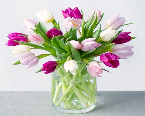 Tulips Flower Arrangements