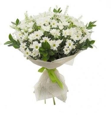 Order Online Chrysanthemum Melbourne