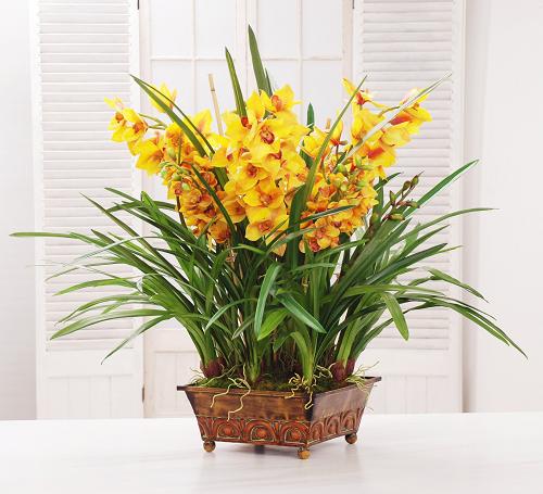 Orchids and foliage arrangement