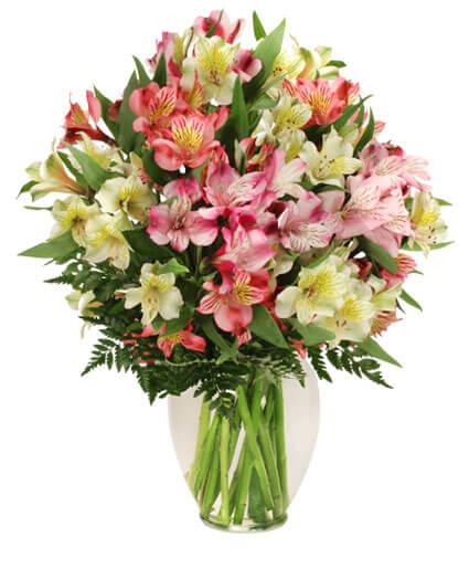 Alstroemeria Flower Online Melbourne