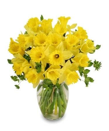 Daffodils Vase Arrangement for Anniversary