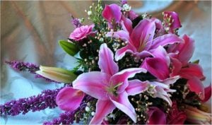 Buy Lovely Asiatic Lilies For Father's Day